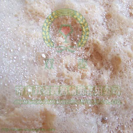 啤酒下面鲜酵母SM3-5