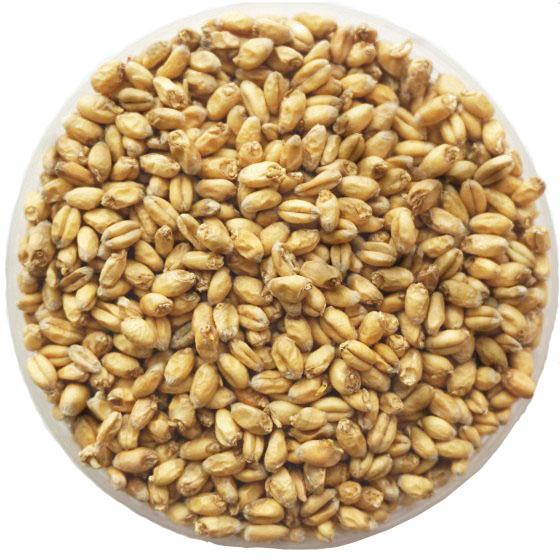 小麦芽SM1-2