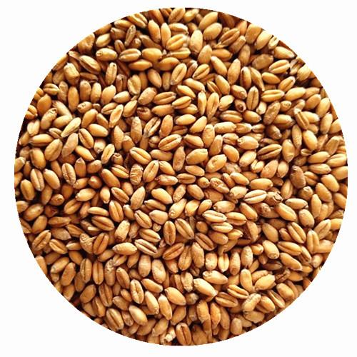 小麦芽浅色焦香SM1-3